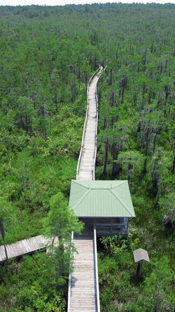 Grand Bay Wildlife Management Area: Boardwalk from Observation Tower
