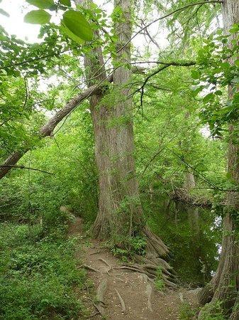 Cibolo Nature Center : Creek Path