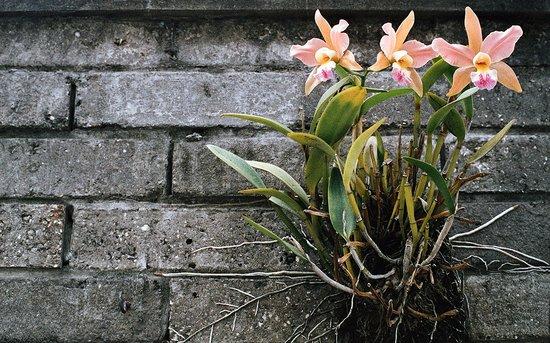 Tangara Guest House : orquídea en el pato