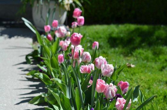Emma Nevada House: Tulips up the walkway