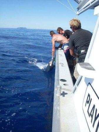 Sandspit Fishing Charters : 2013 Marlin