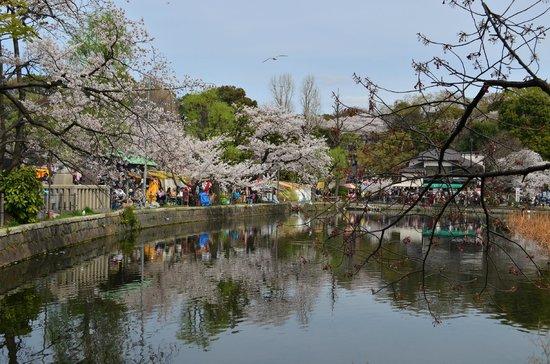Shinobazu Pond : 弁天堂付近