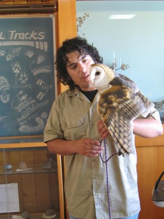 Devil's Punchbowl: Ruth, the Barn Owl, and her handler