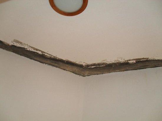 Moisissure au plafond de la salle de bains photo de for Plafond salle de bain moisissure