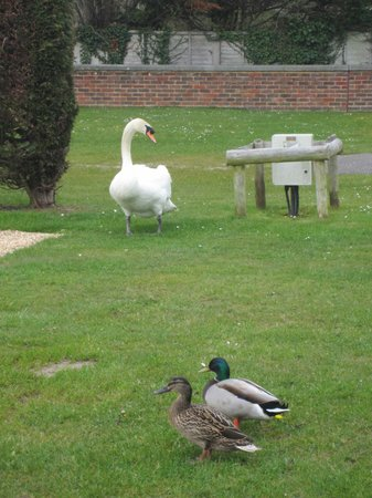 Meadowbank Holidays: If it's good enough for the goose ...