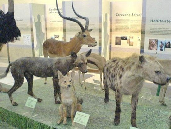 Museo de Ciencias Naturales : Fauna africana