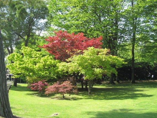Il labirinto bild von parco giardino sigurta valeggio sul mincio tripadvisor - Foto di alberi da giardino ...