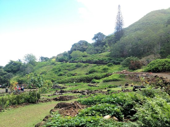 Lower Limahuli Preserve - Picture of Limahuli Garden and Preserve ...