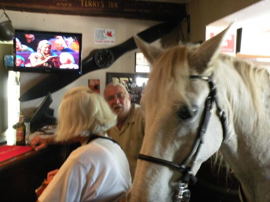 The Historic Pig & Whistle Inn: Kennedy a local horse visits the pub
