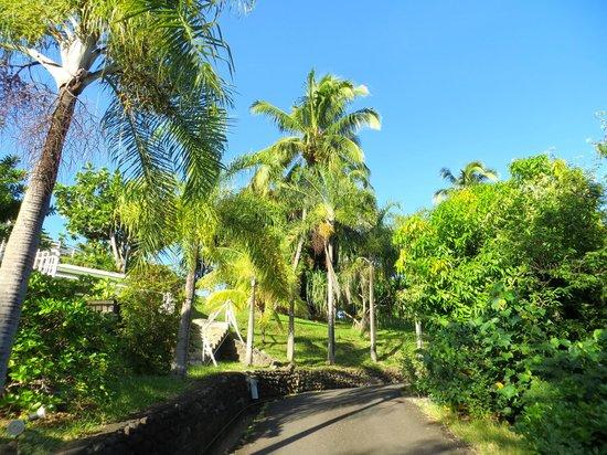 Fare Suisse Tahiti: terrain autour