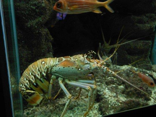 ... oursin tres piquant - Picture of Aquarium de la Guadeloupe, Le Gosier