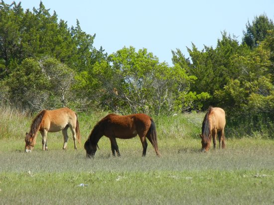‪‪Beaufort‬, ‪North Carolina‬: Wild Ponies!‬