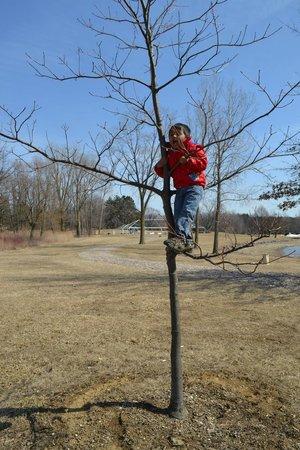 Tree Riding - Stony Creek Metropark