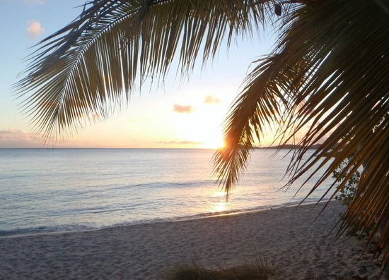 Bluebeard's Beach : Palm trees, sun, sand and beach.