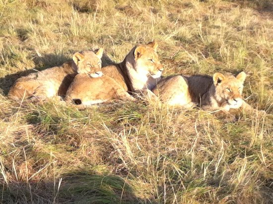 Sibuya Game Reserve & Tented Camp : the naughty boys