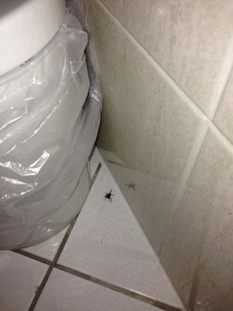 Holiday Inn London-Shepperton: Spidey action