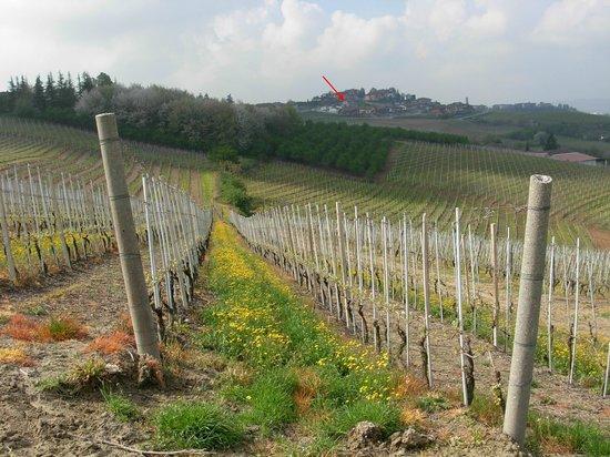 Treiso, อิตาลี: posizione del B&B Domus Langhe visto da una collina vicina