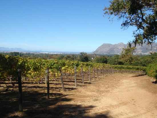 Constantia Uitsig Wine Estate : the vinyards which you can see when have some lunch