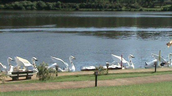 Cocoon Hills : Озеро Грегори