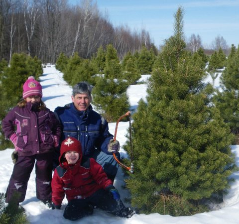 Cut Your Own Christmas Tree Near Me.Cut Your Own Christmas Tree At Hugli S Blueberry Ranch