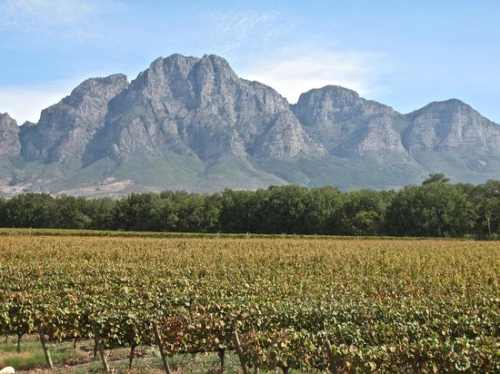 Solms-Delta Farm Tours : The vinyard to the mountain backdrop