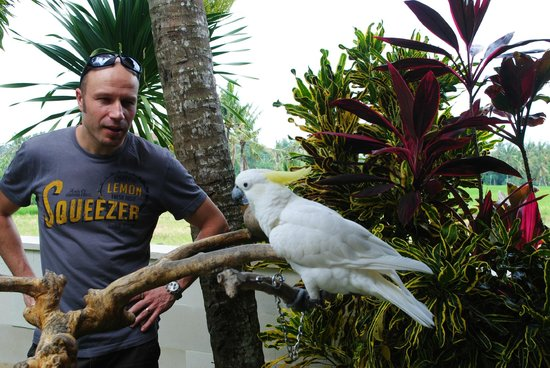 The Zala Villa Bali: we had three parrots in our villa
