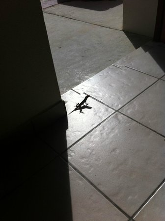 Aruba Quality Apartments & Suites: a little guest