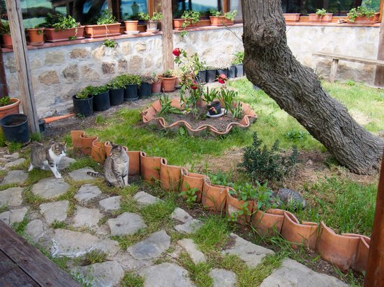 Turismo Rurale Leanza: Katzen 1