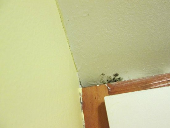 Barnacles Hostel Galway: more mold