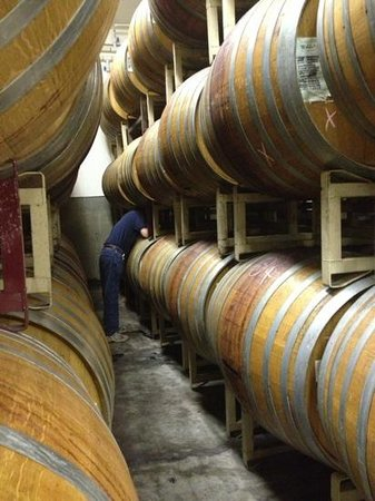 Vino Noceto Winery : Wine maker pulling a barrel sample for us