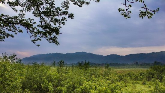 Nature Hunt Eco Camp, Kaziranga National Park: Kaziranga National Park