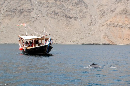 Khasab, Oman: Watching dolphins from the dhow