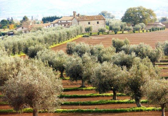 Mosciano Sant'Angelo, Italia: Borgo Spoltino
