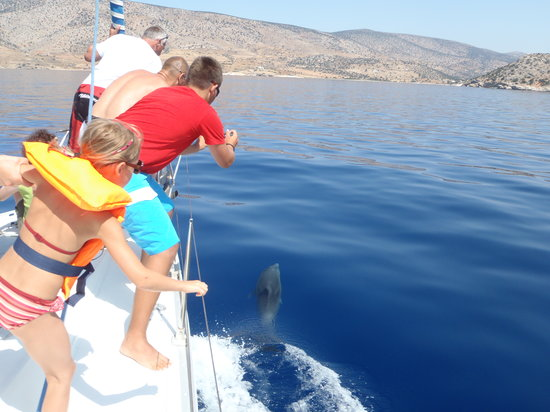 Naxos by, Hellas: Dolphins