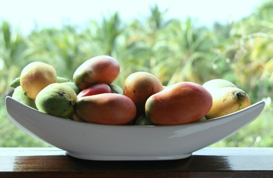 Senteur Vanille: The selection of mangoes picked from the grounds