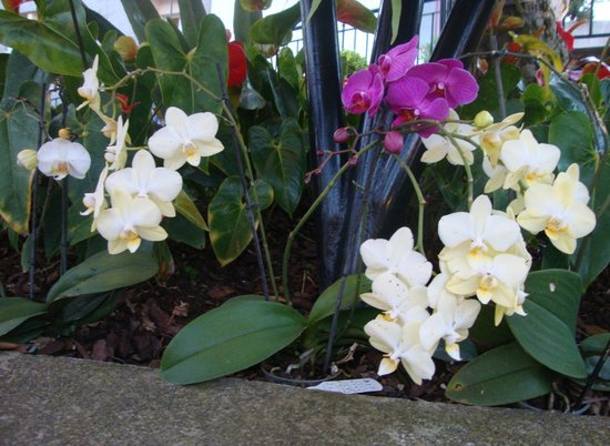 O Dragoeiro: orchids beside our table