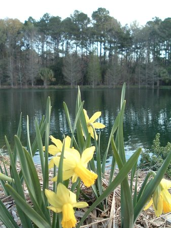 Coastal Georgia Botanical Gardens: View from the Water Garden in March across the lake.