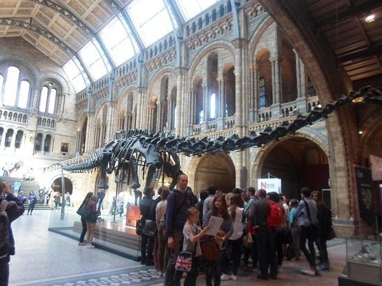Museum Entry Foyer : Entrance foyer picture of natural history museum london