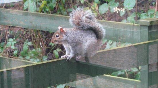 Lindale Holiday Park: Wildlife