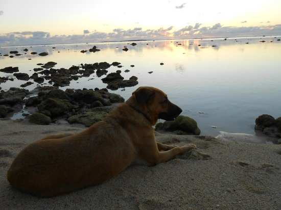 Rarotonga Backpackers : Tripod enjoying the sunset