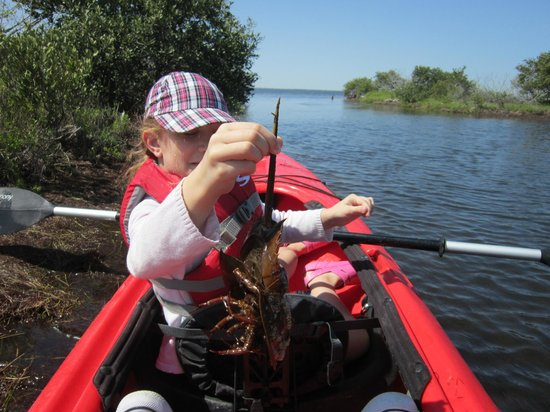 A Day Away Kayak Tours: Spider Crab