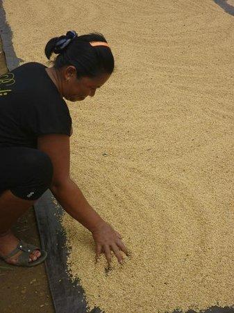Meratus Mountains: Drying Rice