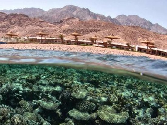 Canyon Estate Dahab Beach Hotel Residence: house reef