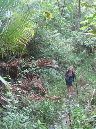Meratus Mountains: Trekking