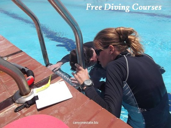 Canyon Estate Dahab Beach Hotel Residence: free diving lessons