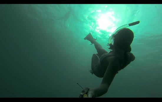 Fish Tobago Guesthouse: snorkling