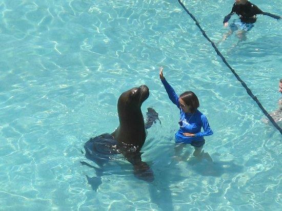 Villa del Palmar Flamingos: Sea lion visited the pool one day