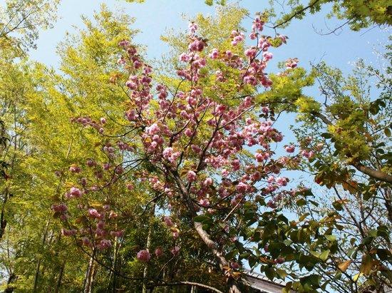 Kyushu Yufuin Folk Craft Village : Flowers of Spring