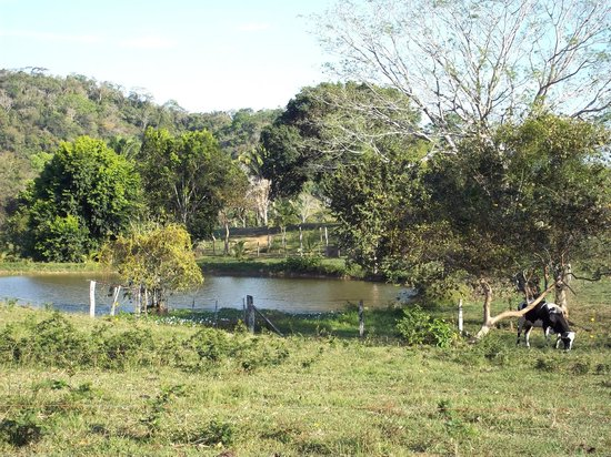 Cool M Farm : pond in the pasture