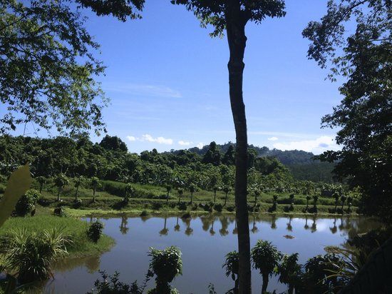 Bambua Nature Cottages: The Pond